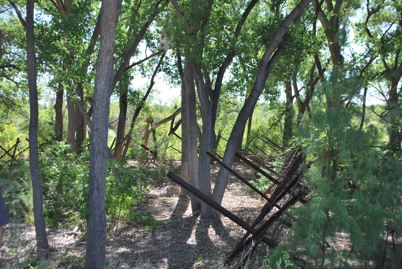 Jetty Jacks placed in the Rio Grande Bosque