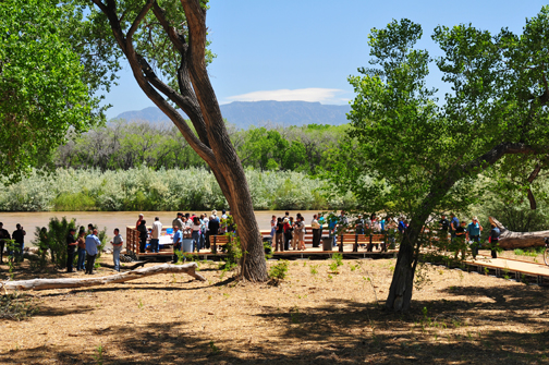 Gathering in the Rio Grande Bosque to look at environmental restoration activities